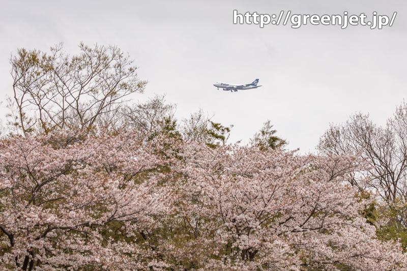 成田で桜と飛行機~遠くBランに..