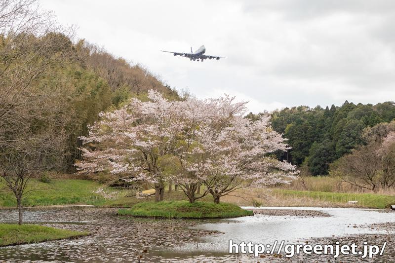 2020 成田の桜と飛行機写真は控えめⅢ