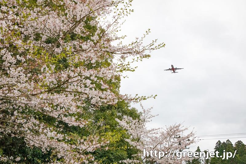 成田のBラン周辺で探した飛行機と桜