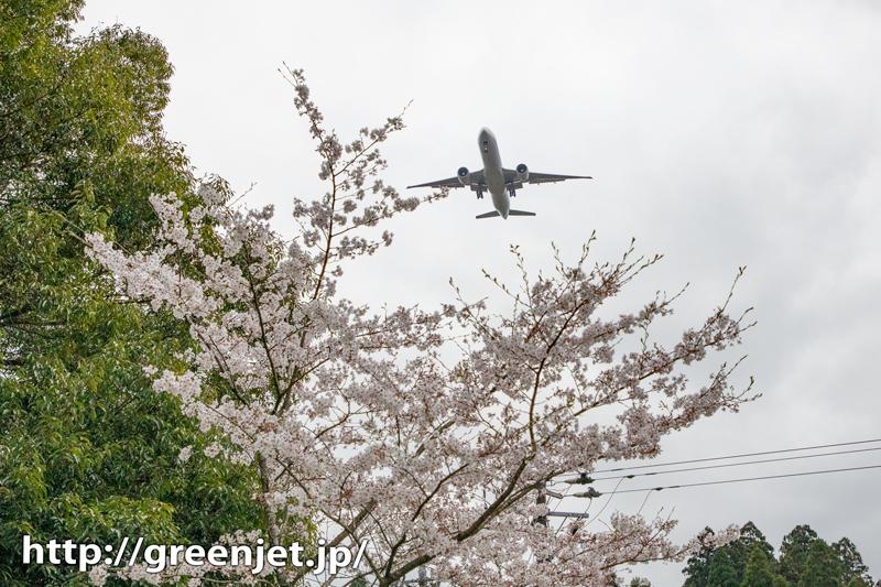 成田のBラン周辺で探した飛行機と桜Ⅲ
