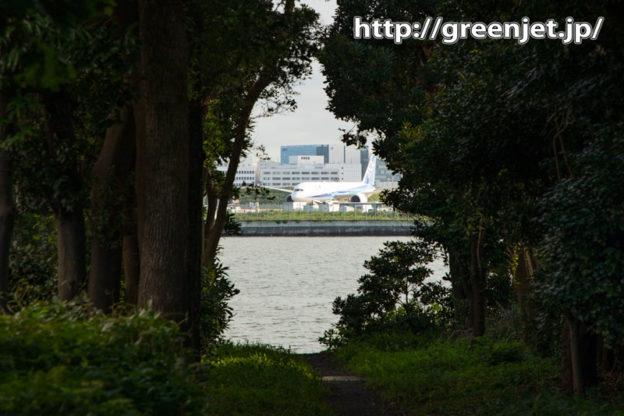 羽田にて~緑のトンネルの向こうに飛行機