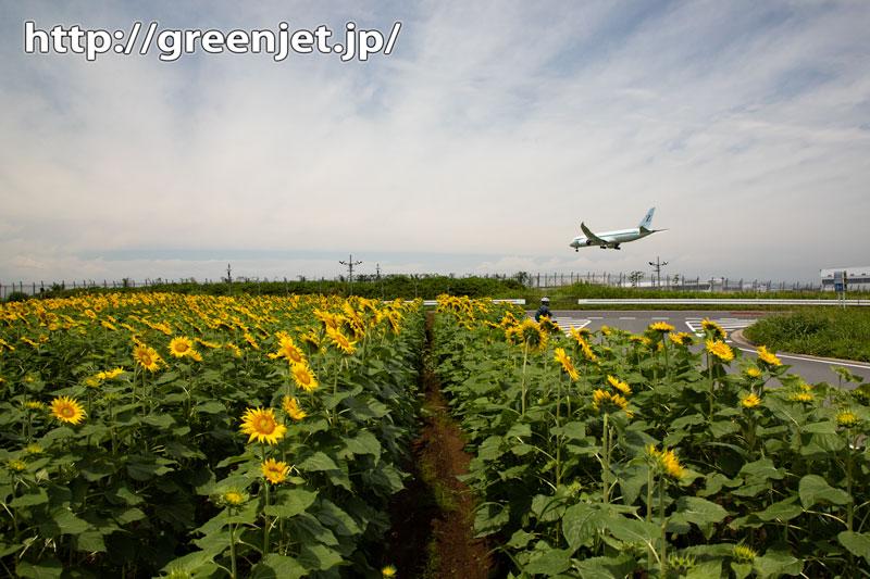 2020年夏のひまわりと飛行機@成田