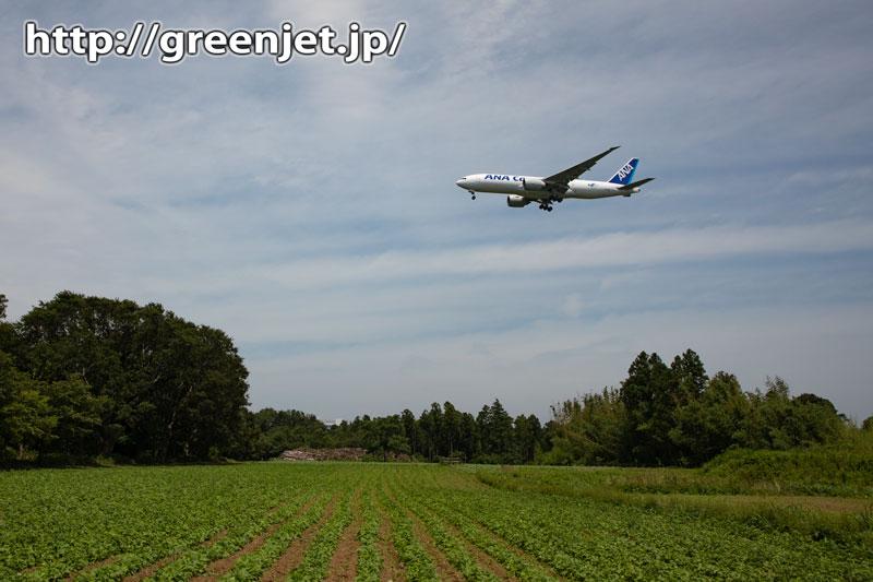 ANAカーゴのB777Fを成田の新緑と