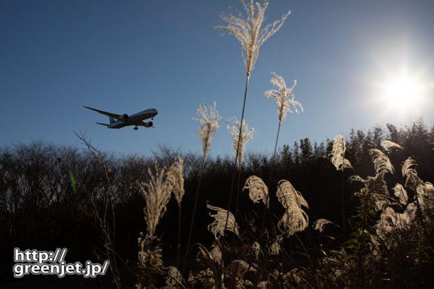 成田で飛行機~水辺の里のすすき