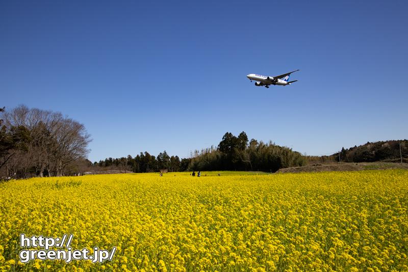 成田で飛行機~2021年の菜の花と飛行機