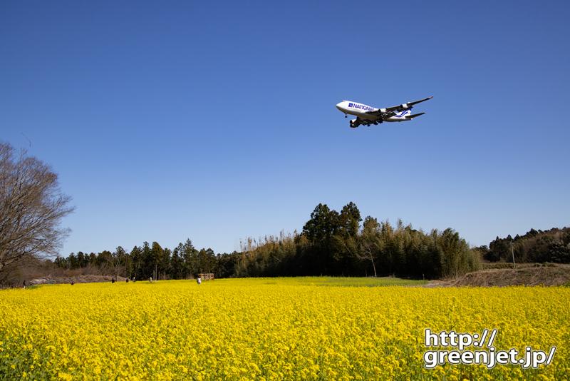 成田で飛行機~菜の花にはジャンボだね