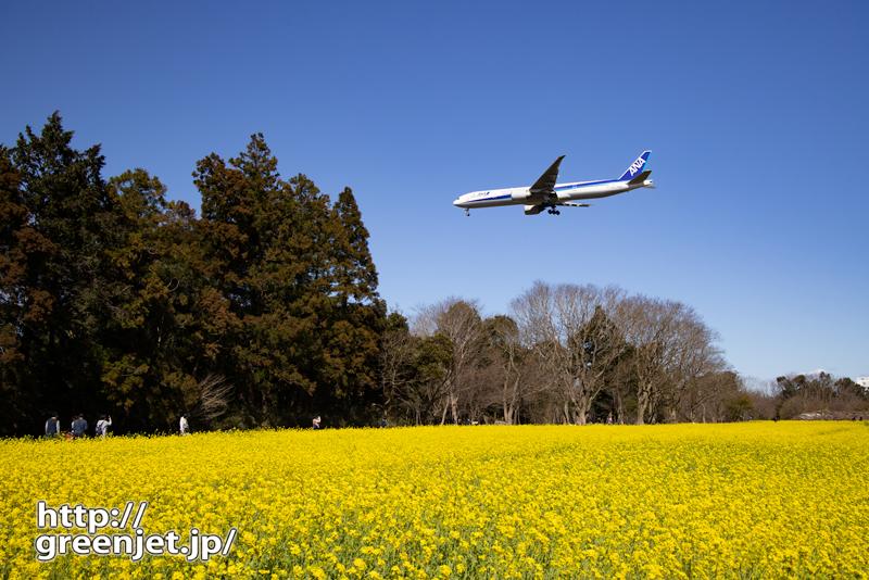 成田で飛行機~菜の花絡め後ろから攻める