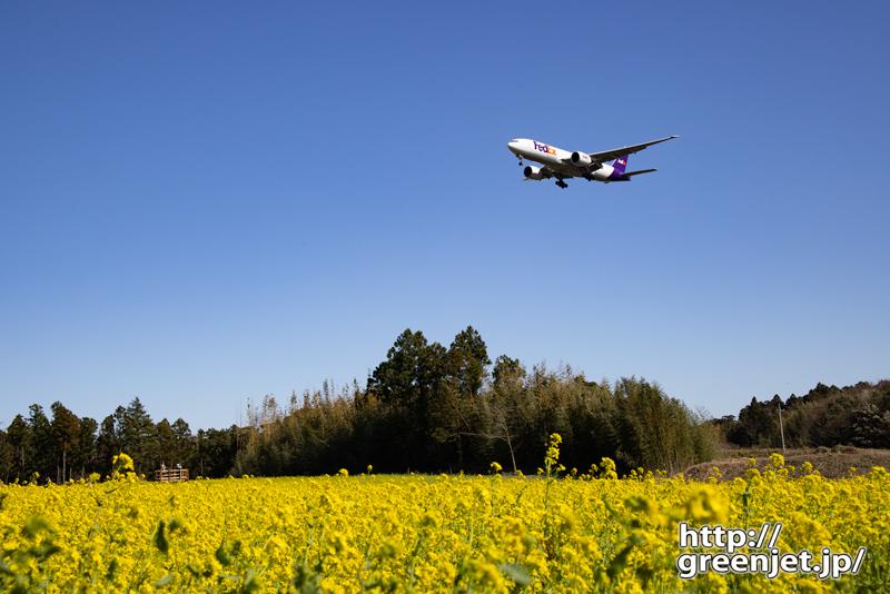 成田で飛行機~低アングルで菜の花を絡める