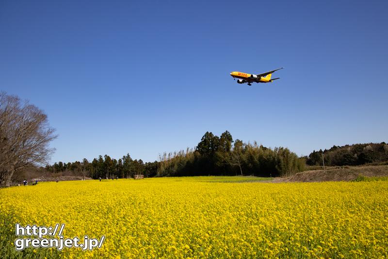 成田で飛行機~菜の花にイエローのB777