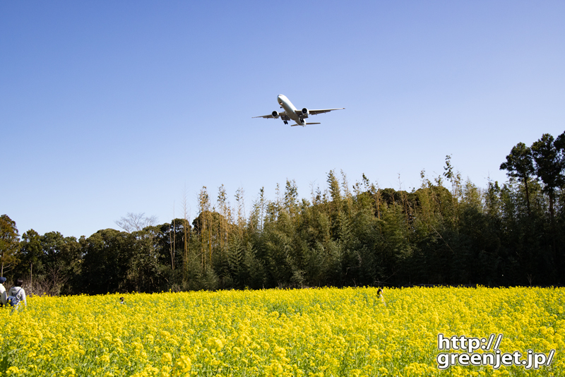 成田で飛行機~正面近くの菜の花絡みを狙う