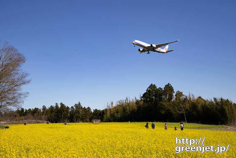 成田で飛行機~貴重!菜の花とダイナスティ