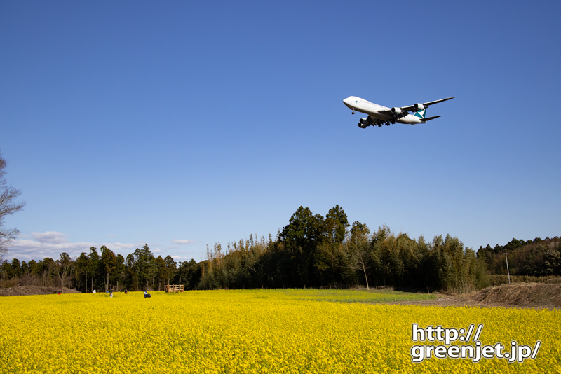成田で飛行機~菜の花とキャセイのジャンボ