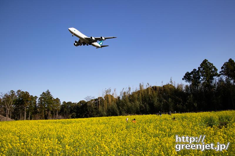 成田で飛行機~2度美味し!菜の花とキャセイ