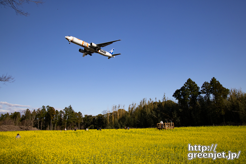 成田で飛行機~菜の花畑にBB-8が舞う!