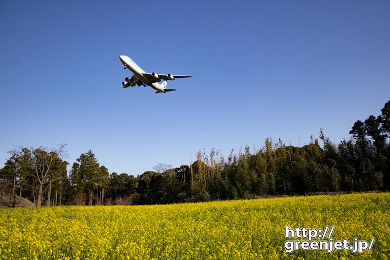 成田で飛行機~菜の花とコリアンブルージャンボ