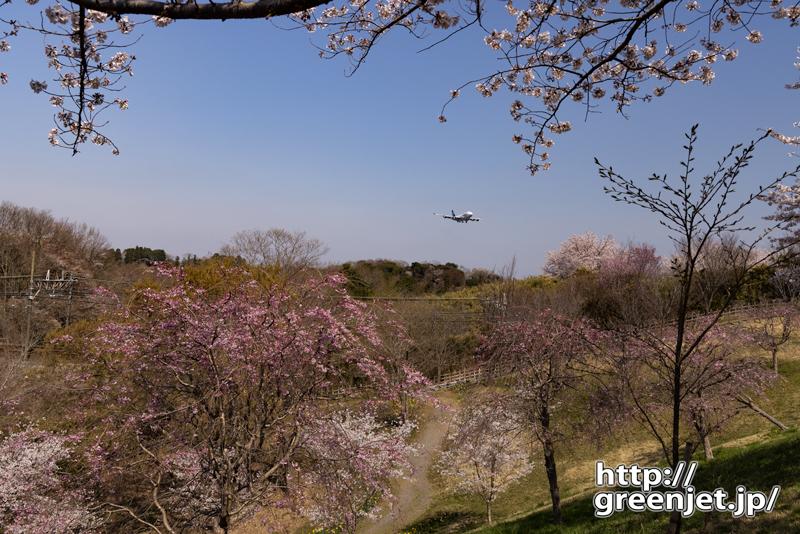 成田で飛行機~桜の谷に降りてきたジャンボ