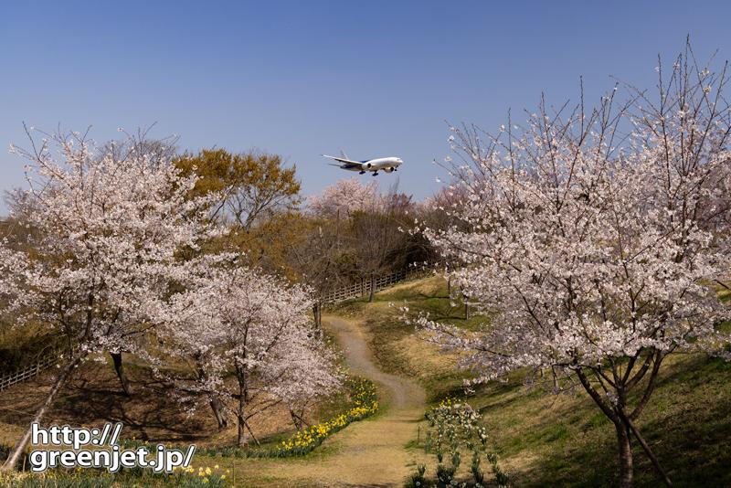 成田で飛行機~くねくね道と桜、奥に飛行機