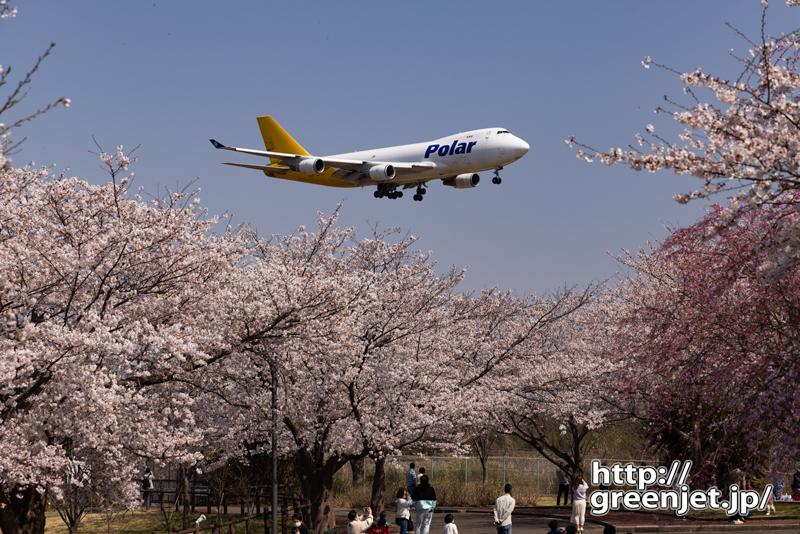成田で飛行機~満開桜にジャンボ舞い降りる