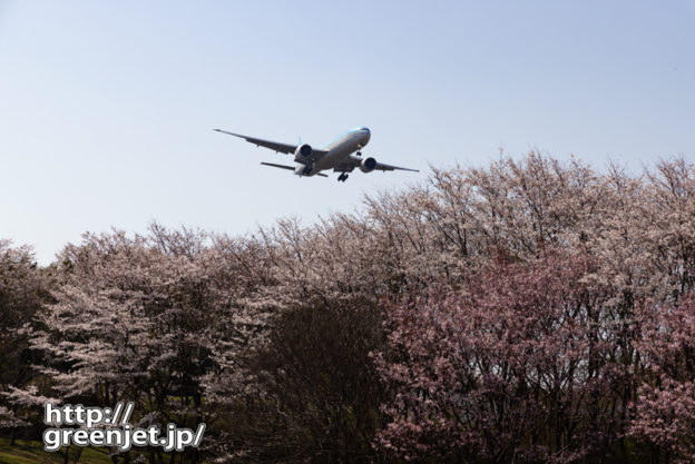 成田で飛行機~桜の海を滑る飛行機