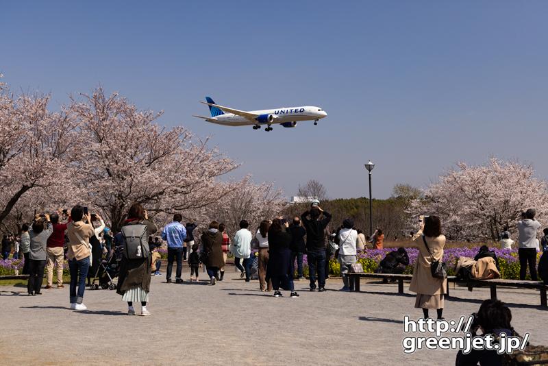 成田で飛行機~桜満開の広場前を飛行機が