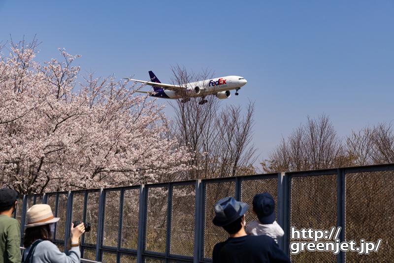 成田で飛行機~邪魔な枝もなんの!桜とともに