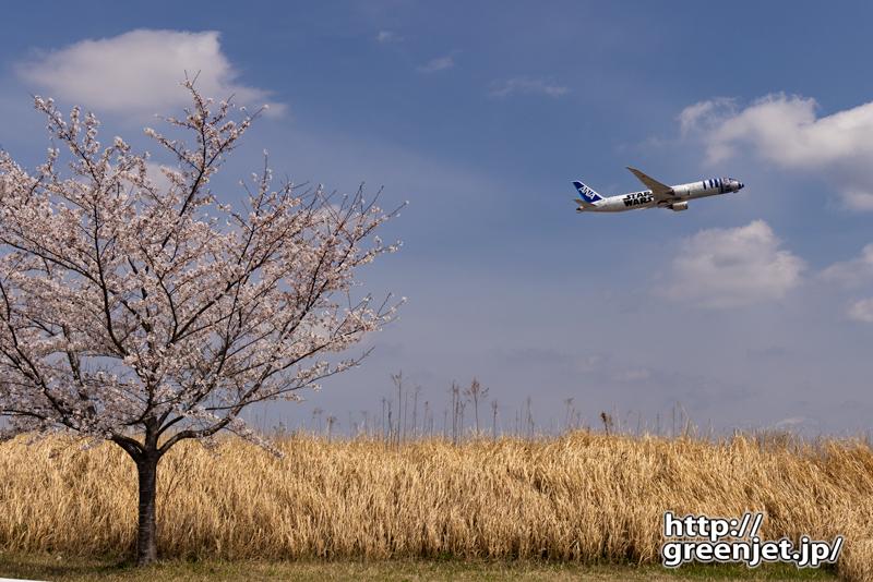 成田で飛行機~桜とスターウォーズ