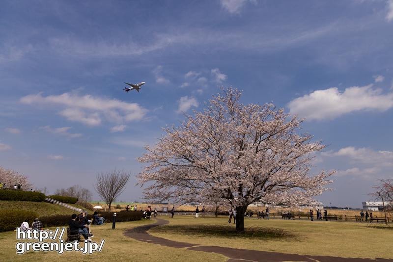 成田で飛行機~丘の上の一本桜と飛行機