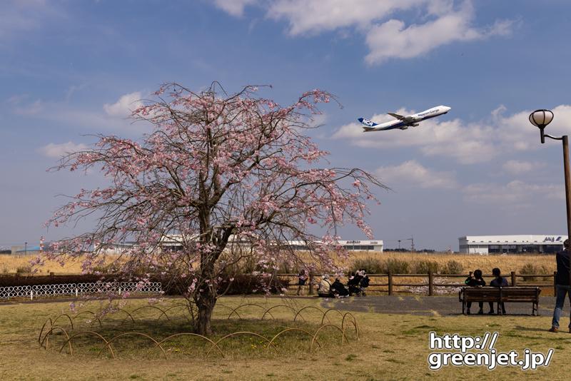 成田で飛行機~丘の上の謎の桜と飛行機
