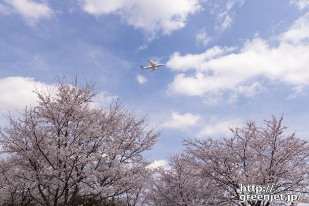 成田で飛行機~桜の上を優雅に上昇