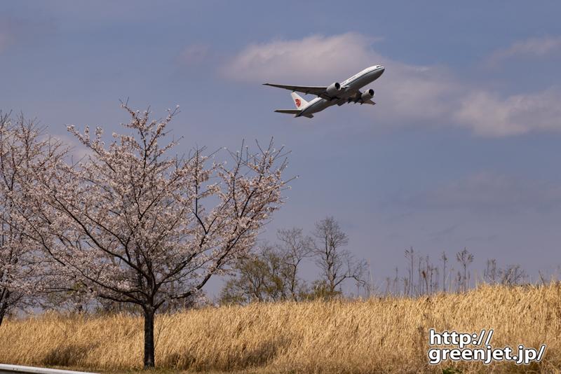 成田で飛行機~桜と稲穂っぽい草と飛行機
