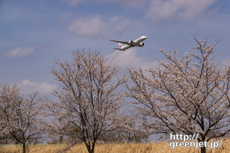 成田で飛行機~桜並木の向こうから上昇Ⅱ