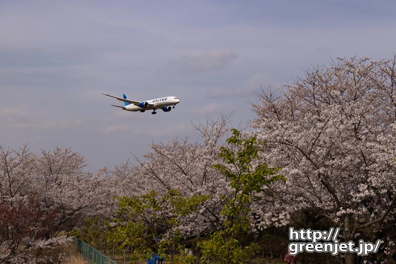 成田で飛行機~桜とニューカラーユナイテッドⅡ