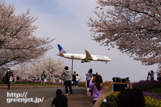 成田で飛行機~誰でも撮りたくなる桜と飛行機