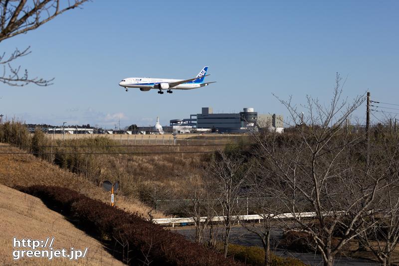 成田で飛行機~桜があればな