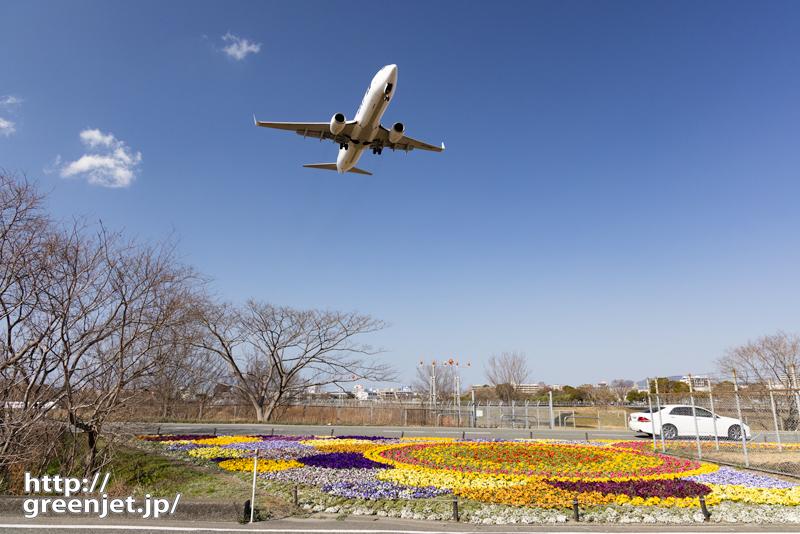 福岡で飛行機~カラフルな花壇と