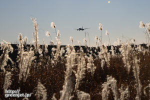 成田で飛行機~輝くススキの向こうから