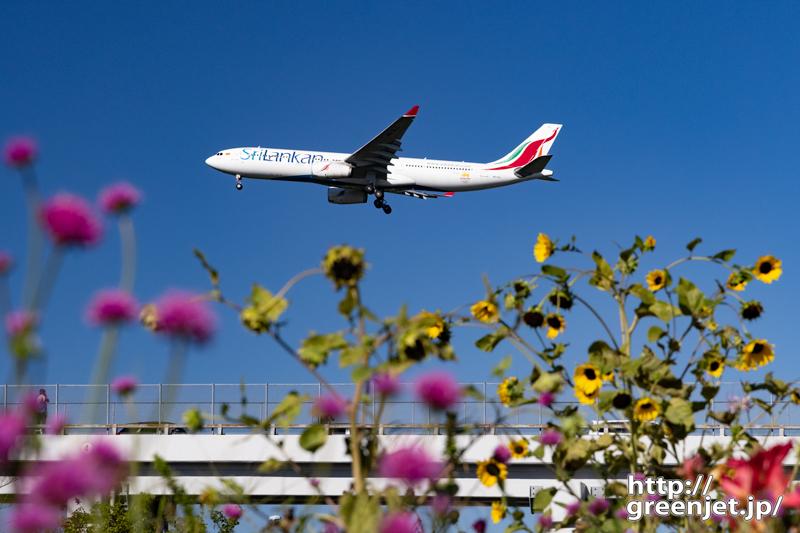 成田で飛行機~夏草たちとA330