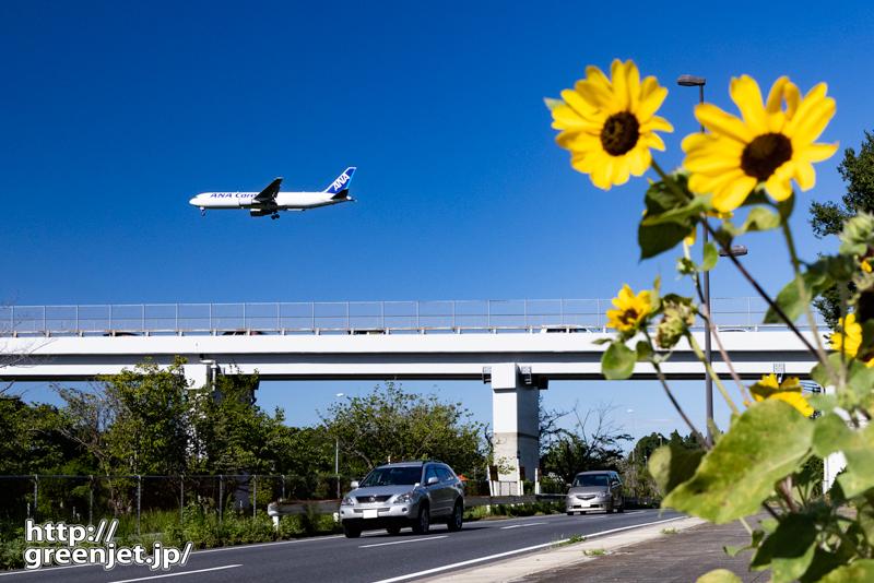 成田で飛行機~道端のミニひまわりと
