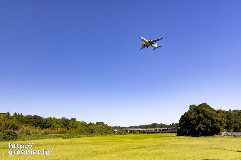 成田で飛行機~黄色い稲穂の上を青い飛行機