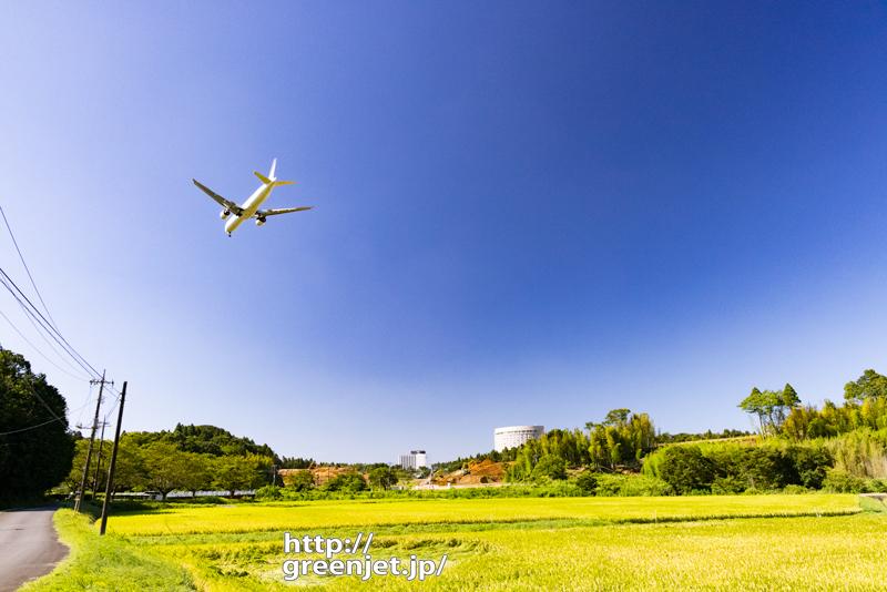 成田で飛行機~稲穂越しに見る飛行機風景