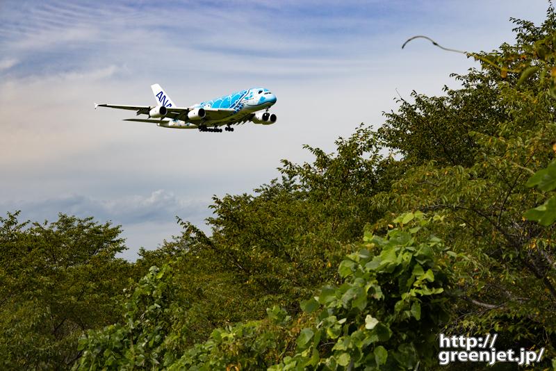 成田で飛行機~フライングホヌ1号機と森